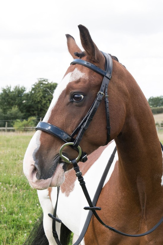 EB English Pony Flat Padded Patent Bridle
