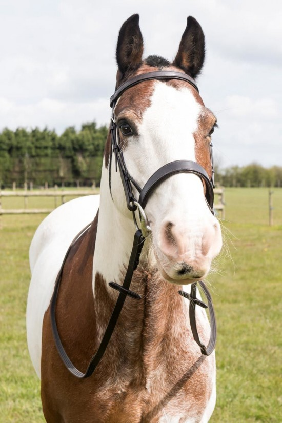 Build A Flat Padded Bridle