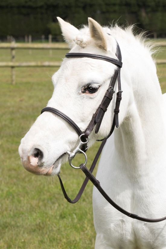 Pony Cavesson Bridle
