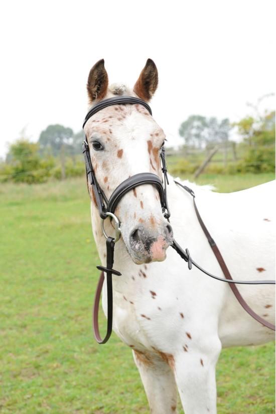 "EB English Pony 1"" Comfort Cavesson Bridle"