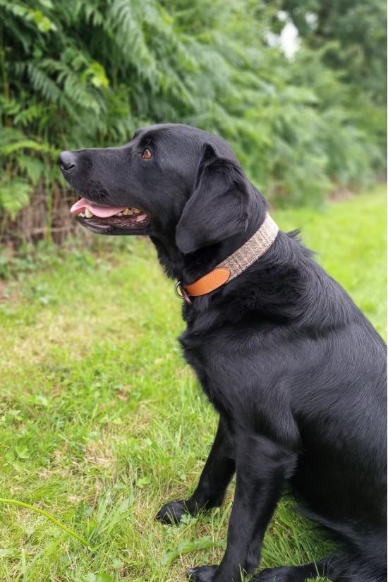 EB Tweed Dog Collar