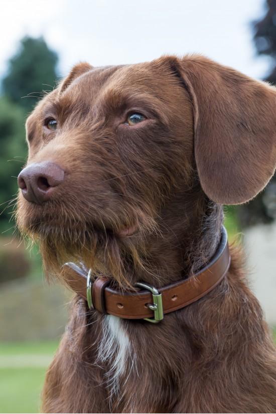EB English Handcrafted  Dog Collar