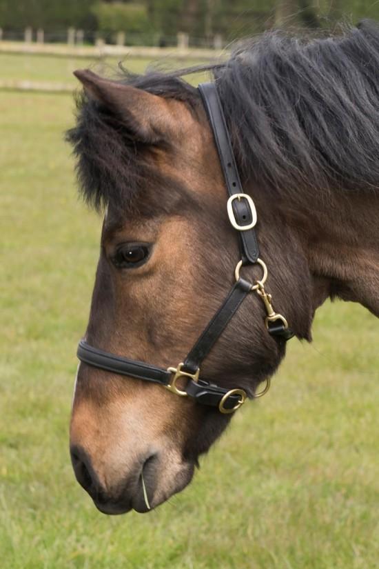 EB Pony Leather Headcollar