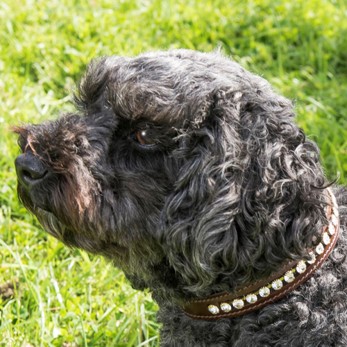 EB Dog Collars and Leads