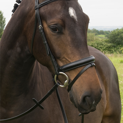 EB BUILD A BRIDLE